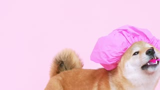 Cute dog with a shower cap
