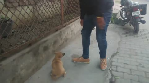 Puppy Dog Wants to play With Owner