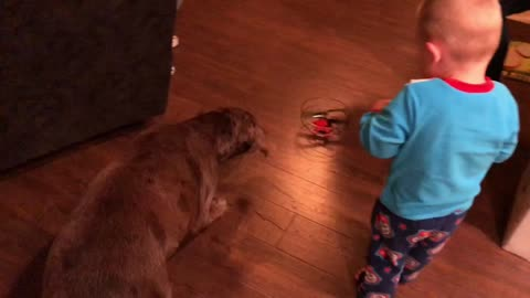 Dog Goes INSANE Over Little Boys New Christmas Present