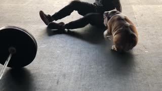 Bulldog cuddles with owner at the gym