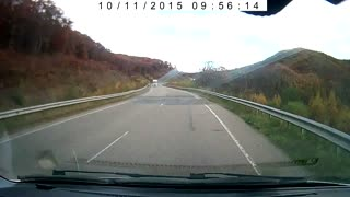 Driver in Russia nearly misses tiger on road