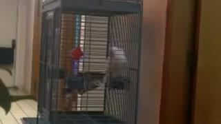 Parrot Making Inappropriate Noises - Video