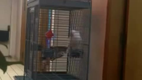 Parrot Making Inappropriate Noises
