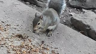 Wild squirrel interacts with woman