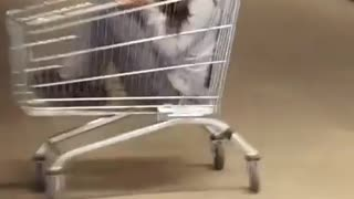 Collab copyright protection vibes - shopping cart fail  - Video