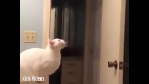 A cat Tries To jump up, But falls on The Floor inThe Bathroom.