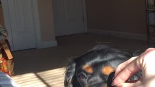 Black dog sniffs owner's hand and there's nothing in it - Video