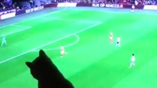 Cat watches soccer