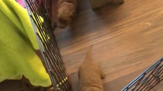 Puppies Make Escape to Mom
