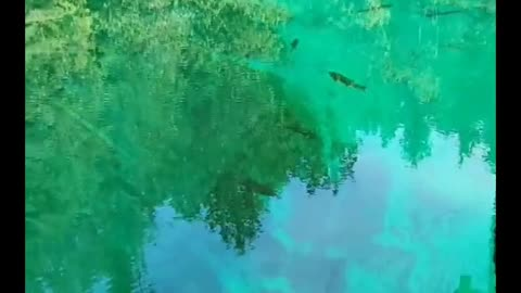 Amazing natural crystal clear spring