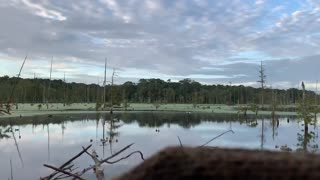 Duck Hunting 2020 • Louisiana early teal season - blue wings on a string
