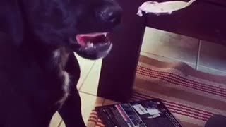 Two puppies lick peanut butter spoon - Video