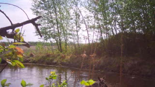 Baby Moose taking a bath - Video