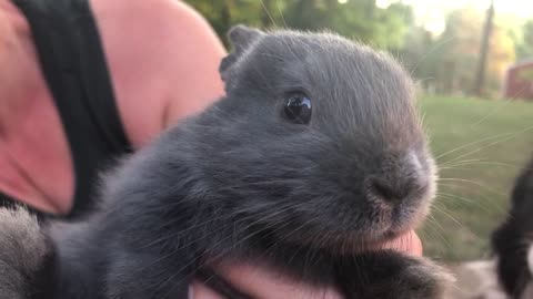 Baby Bunny Wiggles His Nose