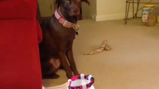 """Dog goes into corner after being """"scolded"""""""