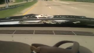 Scary Snake All Over A Car  - Video