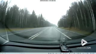 Dogs chase wild bore onto road - Video