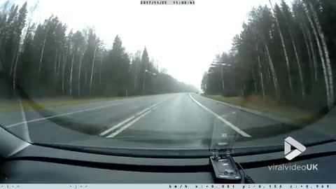 Dogs chase wild bore onto road