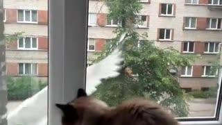 Collab copyright protection - white bird hits window cat jumps