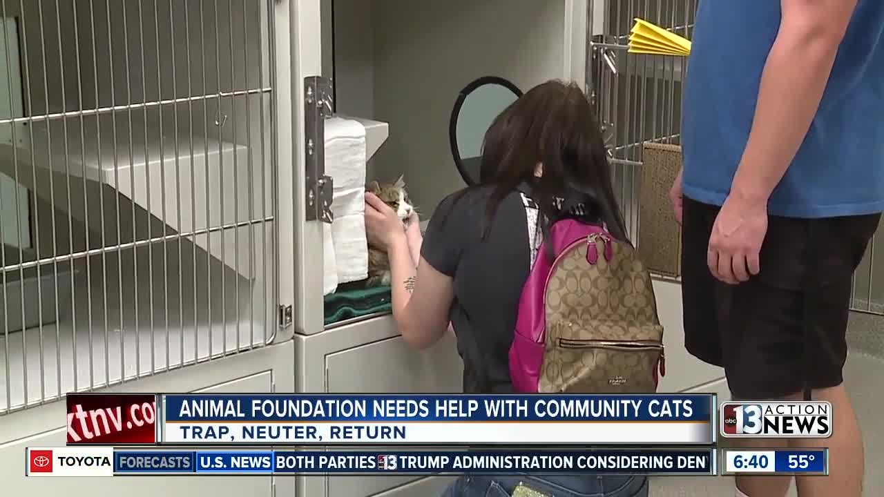 Animal Foundation needs help with community cats