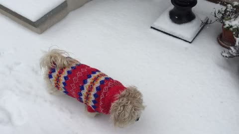 Pup in Snow - Ginger discovers snow