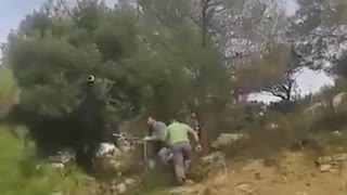 Amazing Saveing Goat