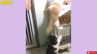 best funny cats and dogs2020/cute baby