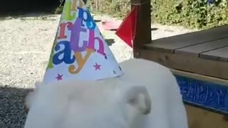Alfie loves cake - Video
