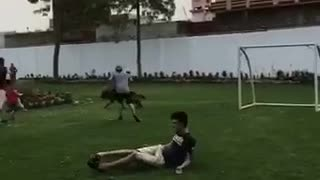 Abbas dog trips owner while running across soccer field