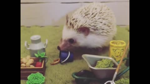 Hedgehog prefers to sit at home