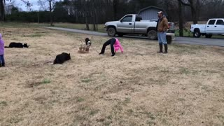 Dogs Lead Ducks Through Tricky Obstacle Course