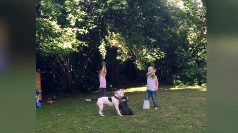 Dogs and children playing together
