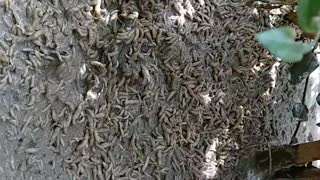 Swarm of Worms - Video