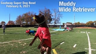 Coolwag Super Dog Bowl Starting Line Up featuring Moose, Muddy and Paisley