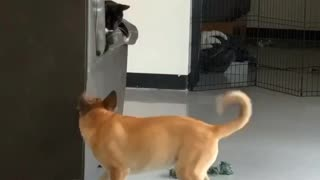Dog and cat playtime will brighten your day