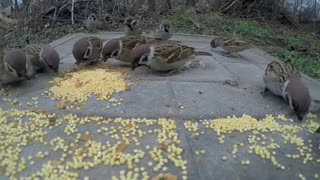 Birds gather for food