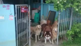 Ninja And The Gang Wait Patiently - Video