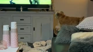 Just a dog barking at other dogs on the TV