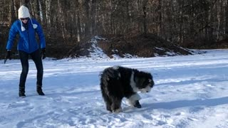 Blue sweater girl slow motion throws snow on black dog - Video