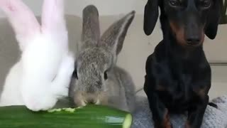 The dog watches rabbits eat - Video