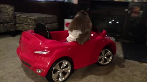 Monkey without seatbelt jumps out of moving car