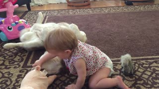 Patient dog allows baby to examine teeth - Video