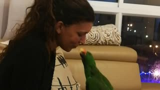 Pixel the Parrot Gives Kisses