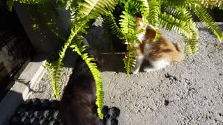 Black Panther And Yellow Kitten Fight - Video