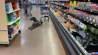 Service Dog: Public Access Shopping During Covid Stuffs