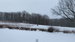 Winter Weather Snow Storm Relaxing Outside Nature Natural Video (01-26-2021)