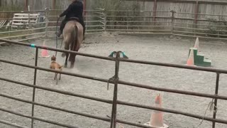 Athena learns to walk with the horses  - Video