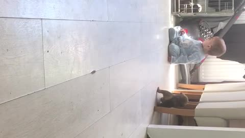 Puppy chases baby
