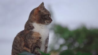 Cute cat Thinking about life