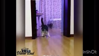 it thought there was a rope to the cat - Video